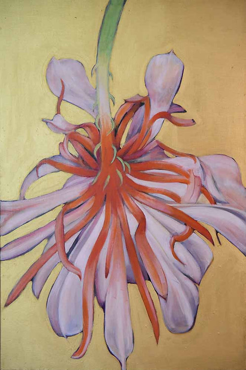 Cactus Flower, pink bloom, original painting by Deirdre Hyde, White City Gallery London