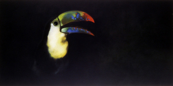 'Toucan' by Mauricio Ortiz - an oil painting of an iconic tropical bird