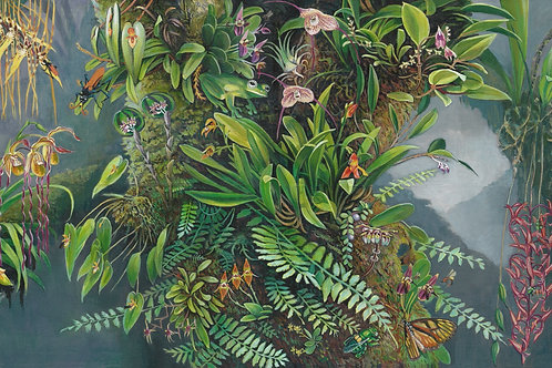 'Orchids and Pollinators' by Deirdre Hyde