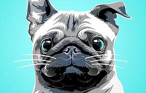 pet-illustration.jpg