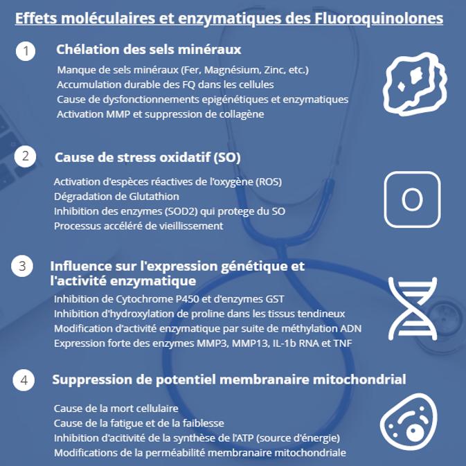 Effets moleculaires Fluorquinolones II.p