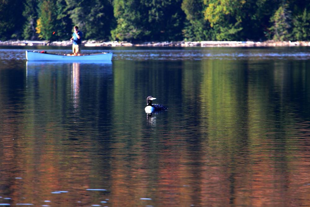Loon and Canoe Rick Sturch
