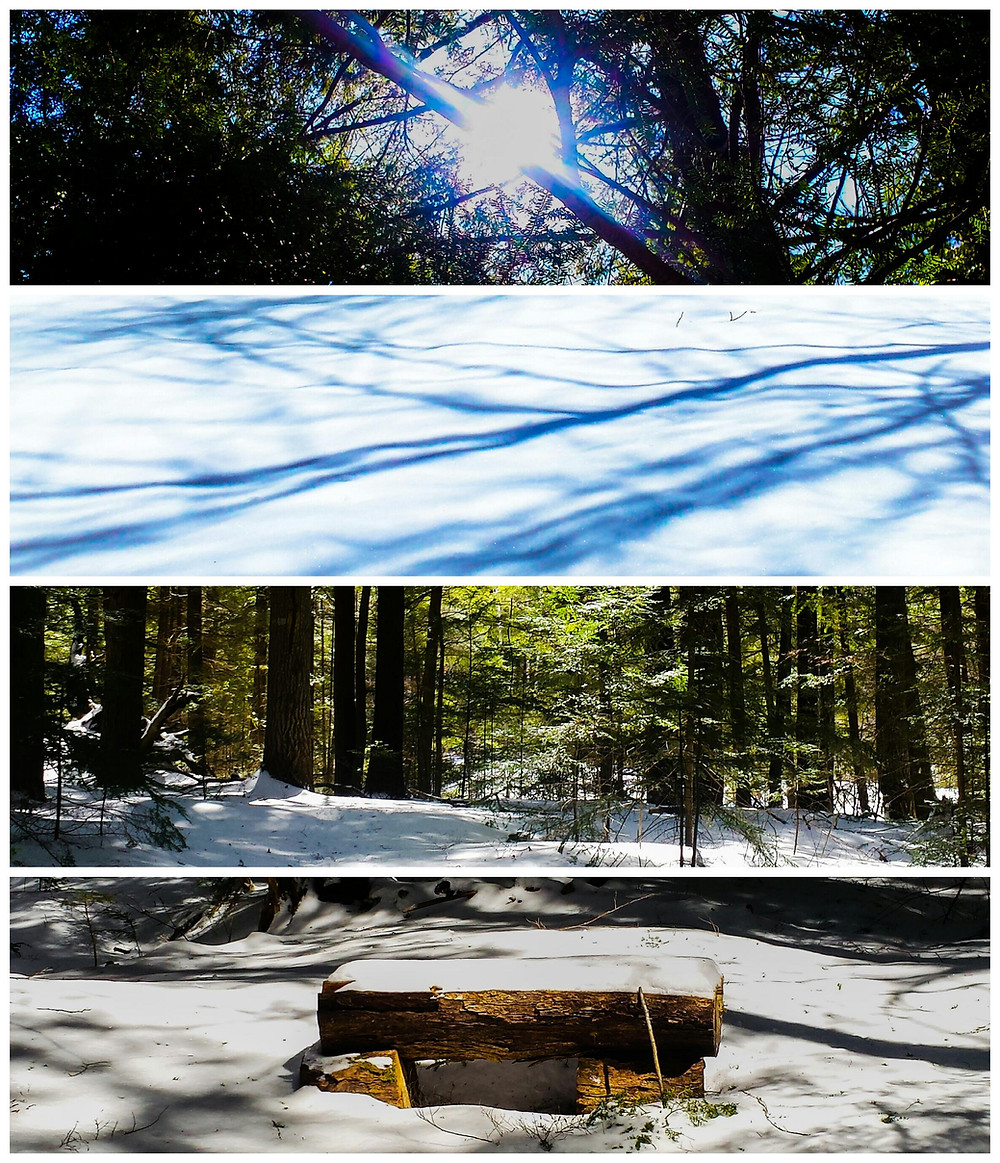 Collage Photoshop Express by Rick Sturch