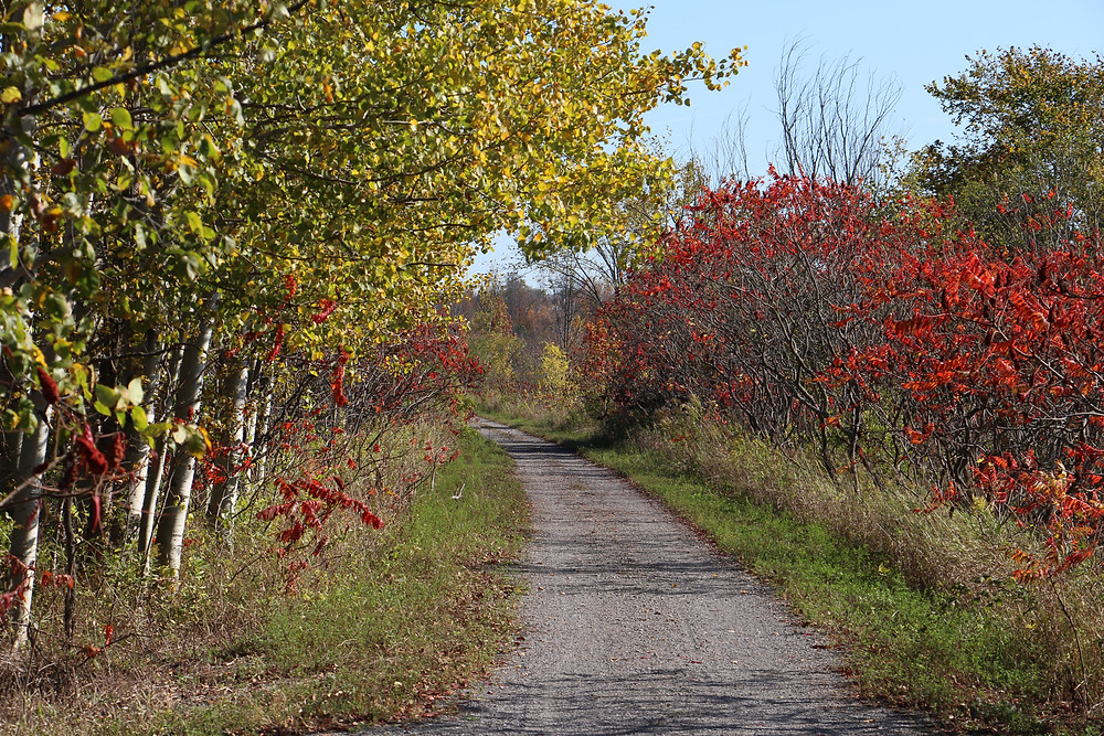 Country Lane on Manual mode by Rick Sturch