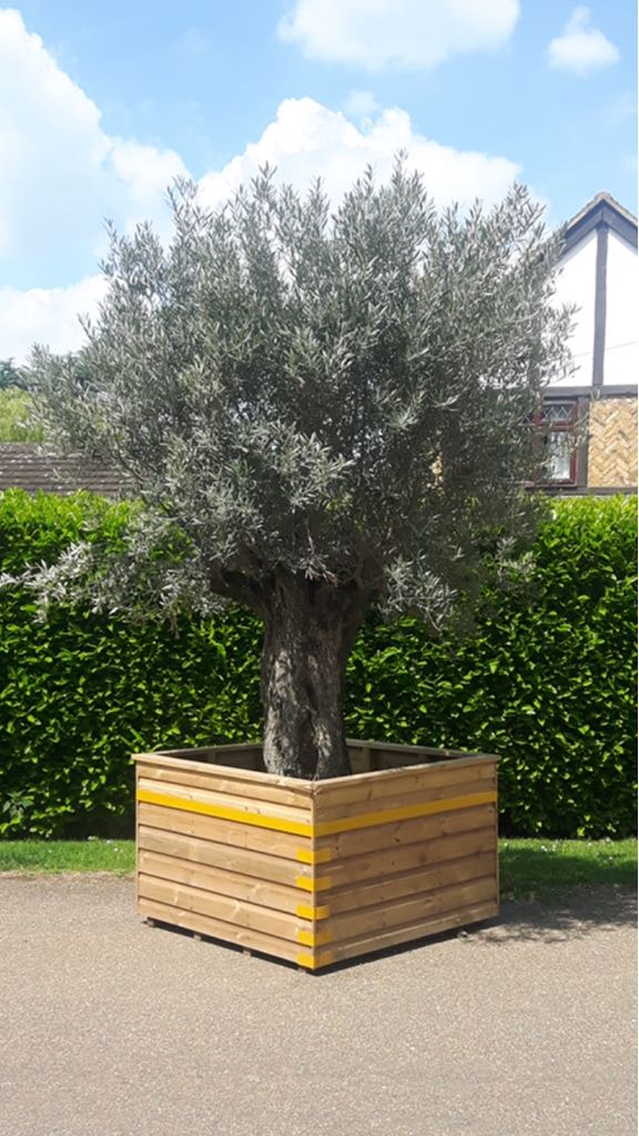 Made to measure planter for trees.