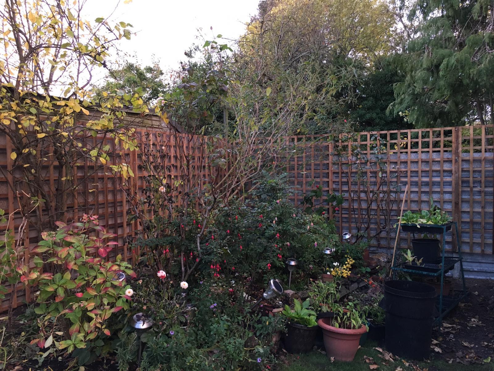 Garden Trellis installers London