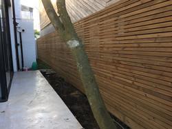 Western red cedar Fencing London