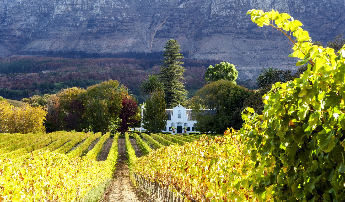 Constantia-Vineyard.jpg