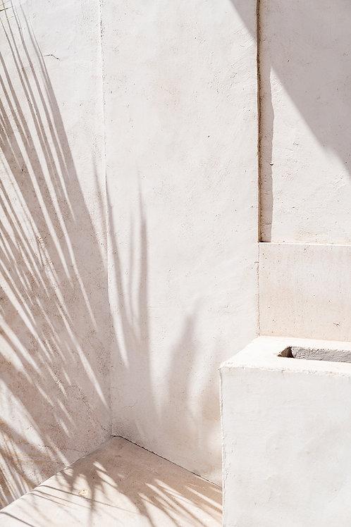 Palmen Schatten
