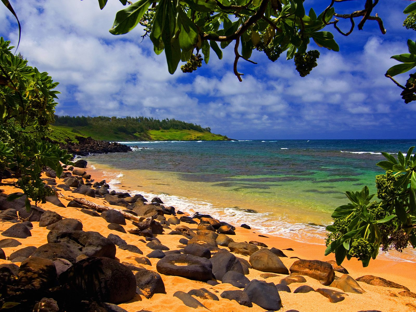 Beach Shade, Moloaa, Kauai, Hawaii