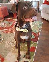 Paulie dog.png