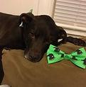 Atticus Love a Bull Bow tie 1.jpg
