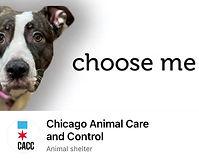 CACC Choose me logo.jpg