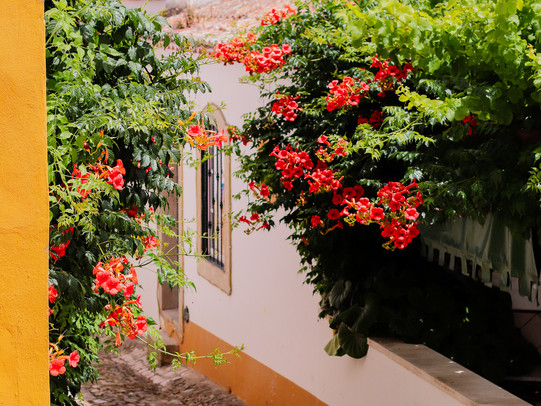 Óbidos_Flowers