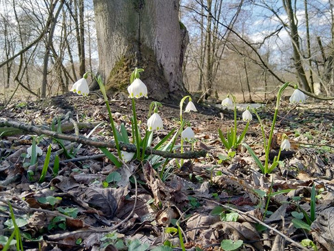 Jaro na Ploučnici