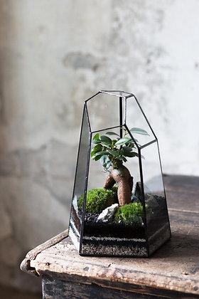 Rastlinné terárium 'Tiffany' M/tall