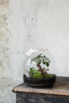 Rastlinné terárium 'Wide'