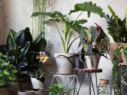 Jarná starostlivosť o izbové rastliny