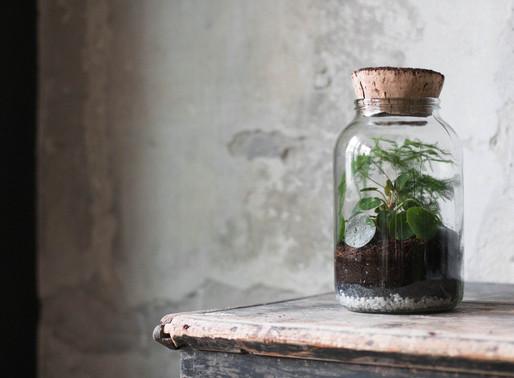 DIY rastlinné terárium