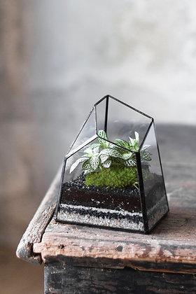 Rastlinné terárium 'Tiffany'XS NEW