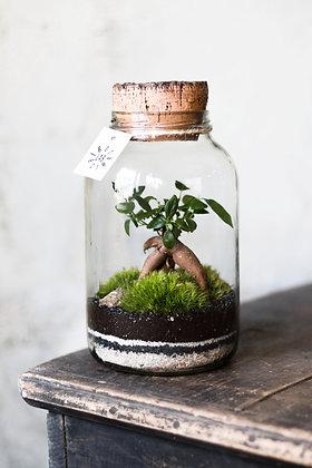 Rastlinné terárium 'Simple' S