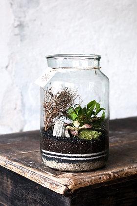 Rastlinné terárium 'Simple' M
