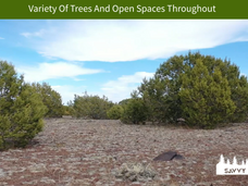 Variety Of Trees And Open Spaces Through
