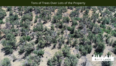 Tons of Trees Over Lots of the Property.