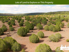 Lots of Land to Explore on This Property.jpeg