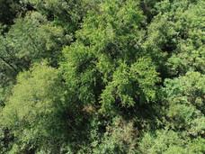 Big Trees Provide Lots of Shade.JPG