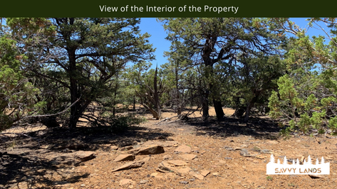 View of the Interior of the Property.png