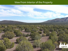 View From Interior of the Property.png