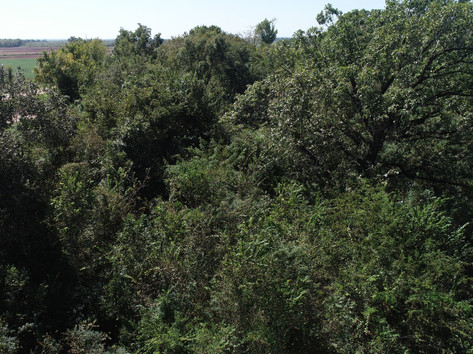 Big Trees on the Property.JPG