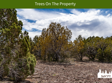 Trees On The Property.png
