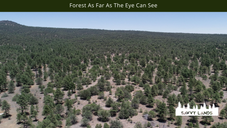 Forest As Far As The Eye Can See.png
