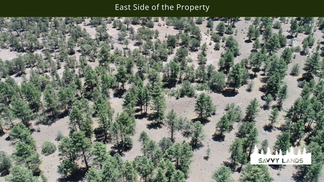 East Side of the Property.png