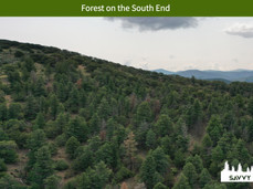 Forest on the South End.jpeg