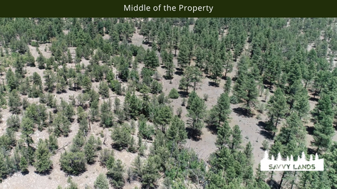 Middle of the Property.png