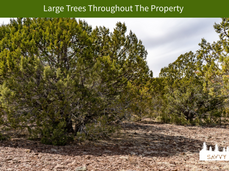 Large Trees Throughout The Property.png