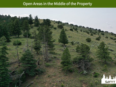 Open Areas in the Middle of the Property.jpeg