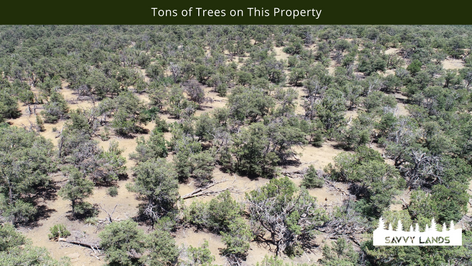 Tons of Trees on This Property.png