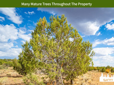 Many Mature Trees Throughout The Property.jpeg