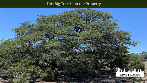 This Big Tree is on the Property.png