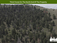 Thick Forest On The North End Of The Property.jpeg