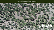 Lots of Trees on This Property.png