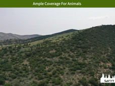 Ample Coverage For Animals.jpeg