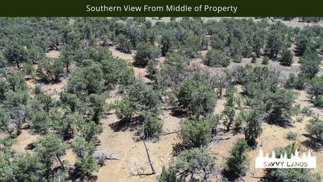 Southern View From Middle of Property.pn