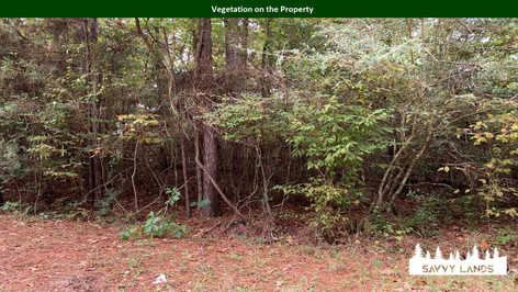 Vegetation on the Property.jpg