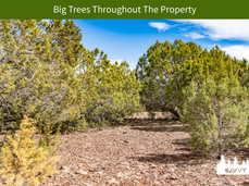 Big Trees Throughout The Property.png