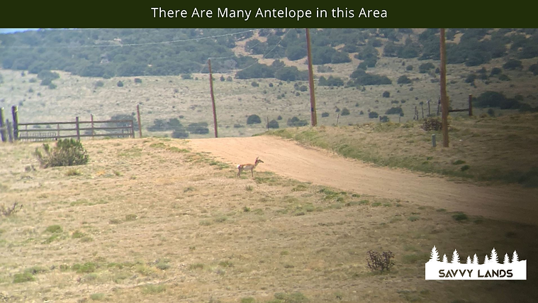 There Are Many Antelope in this Area.png